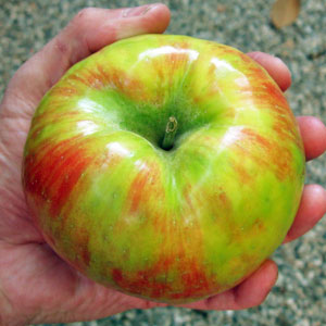 honetcrisp apple