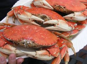 steamed dungeness crabs are a sustainable choice