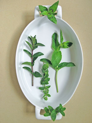 5 varities of mint