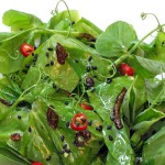 Pea Tendril Salad with a Warm Sesame and Red Chili Dressing
