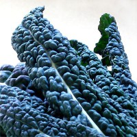 Tuscan Kale